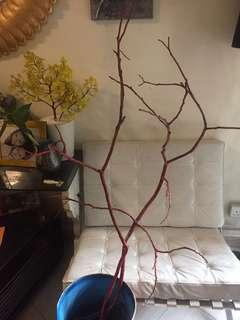 CNY Angpaw Tree (painted red branch?)