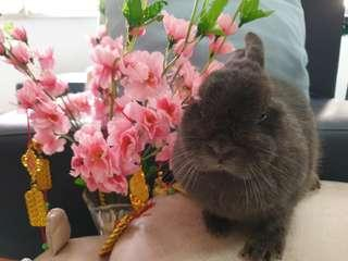 Mobile Bunny Grooming