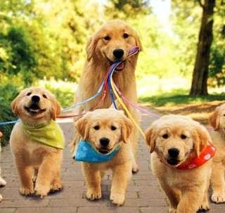 Free Dog walking/jogging (ad hoc)