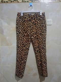 ZARA NEW LEOPARD PANTS