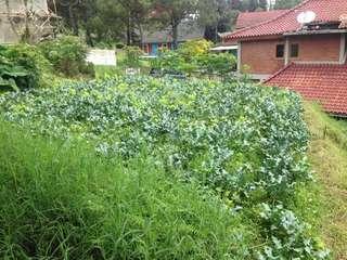 Tanah di kawasan villa istana bunga nego