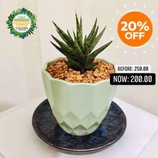 Cactus & Succulent for SALE‼️