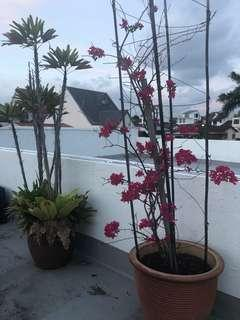 Lots of rooftop plants for sale - price range $40 to $150