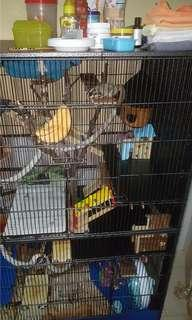 Cage for Sugar Gliders , Sugargliders , Hamsters etc