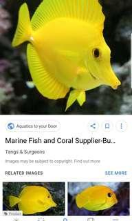 Looking to buy FREE MARINE FISH TANK