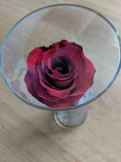 Red Rose in Glass vase - Sealed