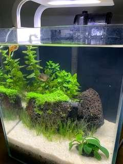 Aquascaped Fish Tank with Accessories for Sale