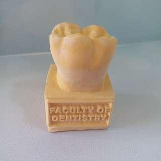 Tooth model from Faculty of Dentistry
