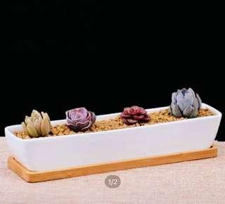 🚚 White ceramic rectangular planter with bamboo tray