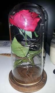 Beauty and The Beast Rose