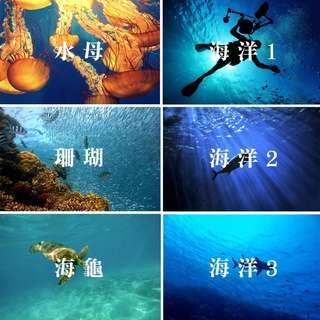 🚚 ●台灣現貨●【哇來WaLai】攝影佈景組-拍攝背景 拍照桌巾 拍照背景 攝影道具 拍照布景 拍照道具 海洋 大海 海龜