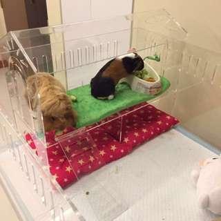 BN Guinea Pig Acrylic Hideout / House