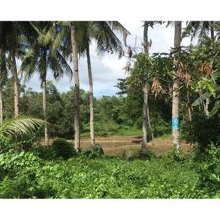2.8 Hectares LOT FOR SALE IN BOHOL!!!