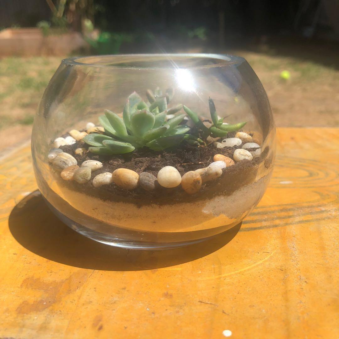Cute succulent Terrarium