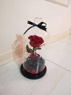 Preserved Red Rose in Jar with LED light