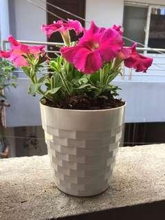 White Pots for Plants