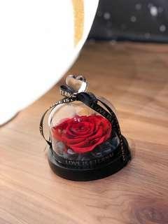 保鮮花永生花(附夜光燈)  Preserved Flower