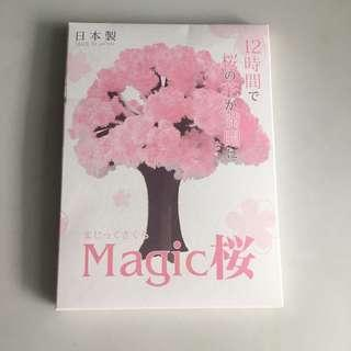 Magic 櫻花