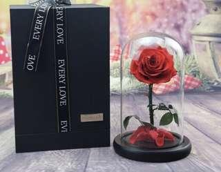 Extra Large Premium Glass Real Flower Display Bell Jar Ecuadorian Dome Immortal Preservation Preserved Love shape Glass Jar Rose Colour 24 Gifts Flowers Roses Her Minimal Care lasting