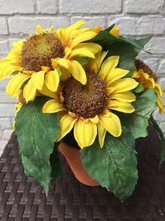 Sunflowers Pot