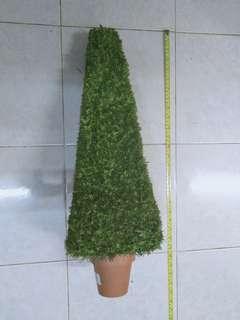 Chrismaz tree