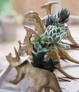 Gold Dinosaur Succulent