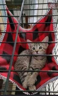 Cat/kitten Hammock OFFER 1 For $8 or 2 For $10 FREE 1PC