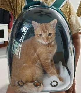 Pet Carrier Transparent Backpack CAT KITTEN RABBIT BIRD