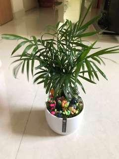 Small Cute Plant with Totoro character.