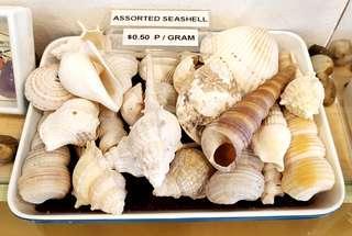 🚚 Sea shells assorted