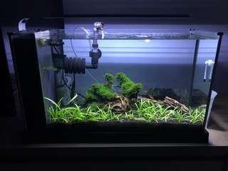 <SOLD>Fluval spec V Freshwater fish and shrimp tank/aquarium