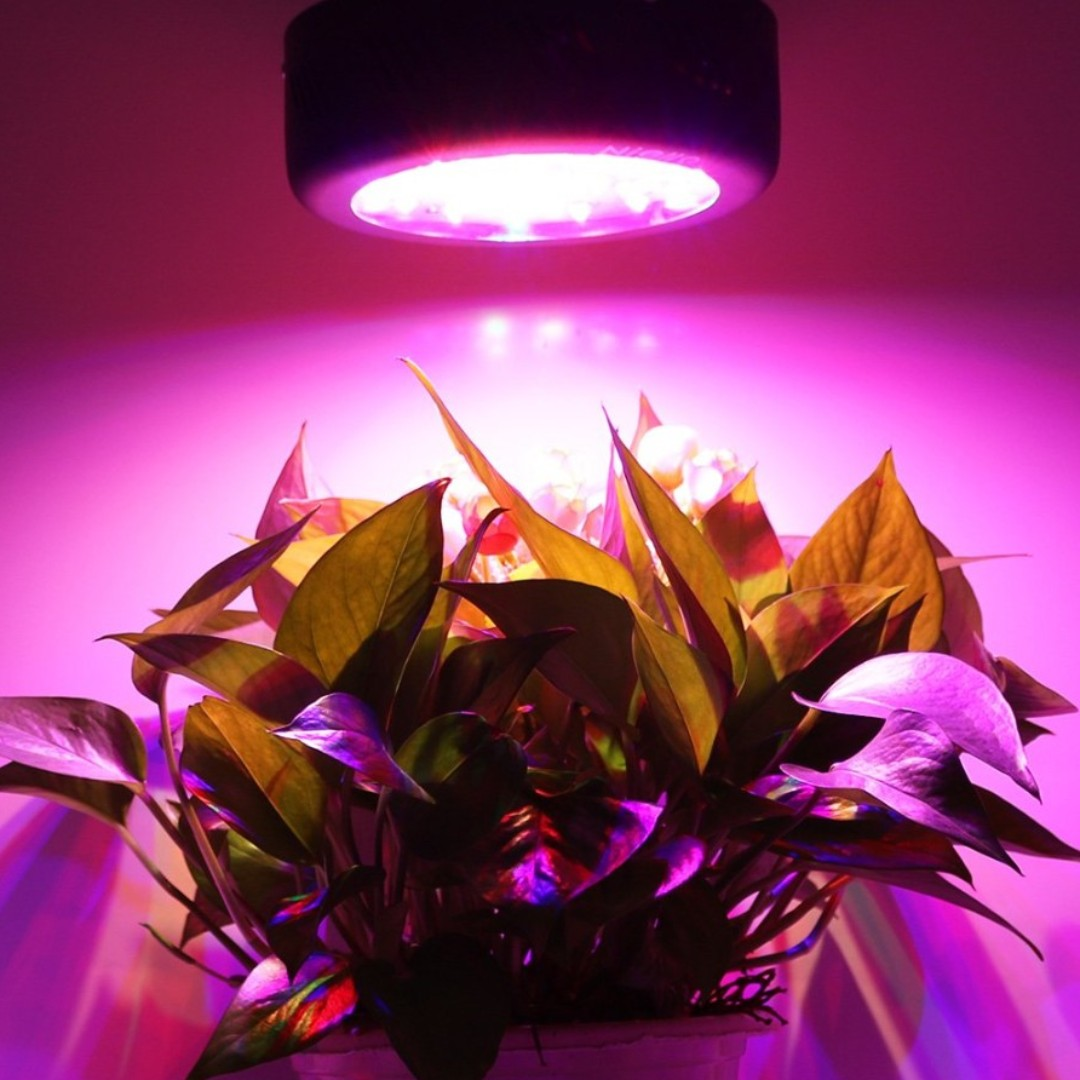 Light Ufo 150w For Led Plant Grow All Plants nN0wO8yPvm