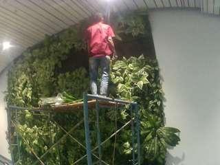 Pembuatan Taman Vertikal Garden Di Area Tembok
