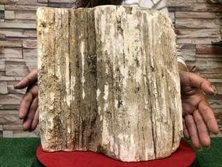 🚚 天然木化石【託售】