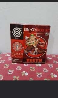 Ein-O's Human Biology Teeth kit #TRU50