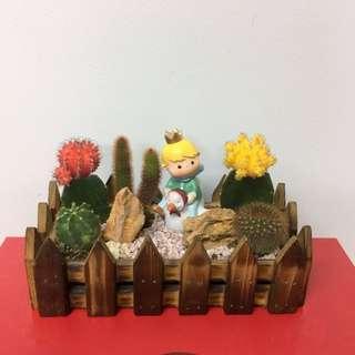 The Little Prince Cactus Garden-Table Top Plants