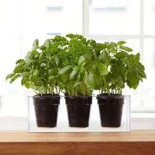 Bosske 3 cube planter