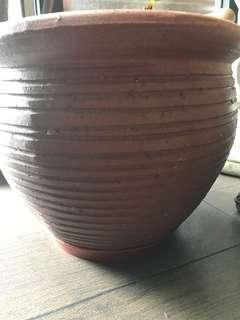 Plant Clay Pots 花盆