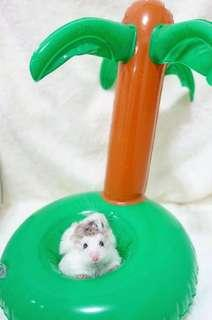 Inflatable Drink Holder / Photoshoot Prop For Hamsters