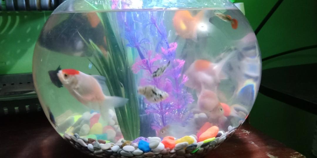 Aquarium Bulat 7 Liter Perlengkapan Hewan Aksesoris Hewan Di Carousell
