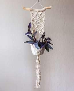 Macrame pot hanging