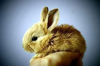 Mobile bunny grooming (housecall)