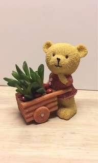 Real Succulents w Teddy #MFeb20