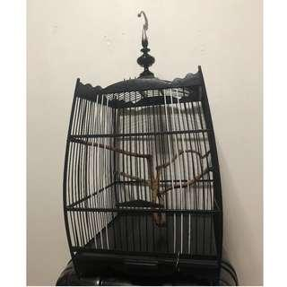 Black and Brown Bird Cage