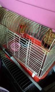 🚚 鳥籠 寵物籠 鼠籠