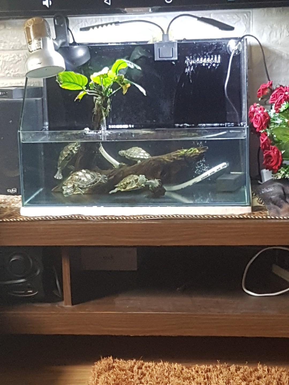 Terrarium Tank  -for Tortoise, Crab, Gecko, etc..