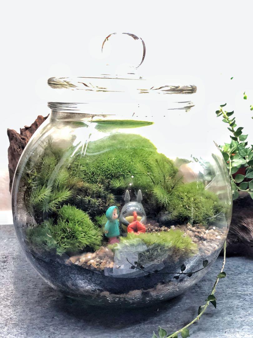 Totoro Round Glass Terrarium Home Furniture Home Decor On Carousell
