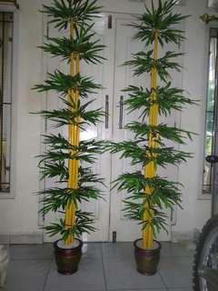 Pohon Bambu Hias