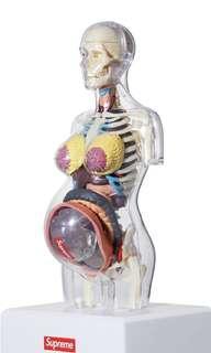 🚚 Supreme人體模型