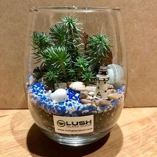 🚚 Perfect Gift for Valentine's/ Valentine/ V day/ Anniversary/ Birthday/ House warming/ Event Gifts- Real Plant Succulents/ Cactus Terrarium